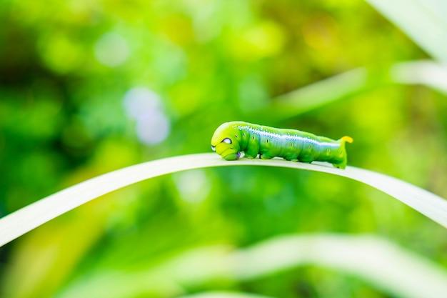 Зеленый червь на листе