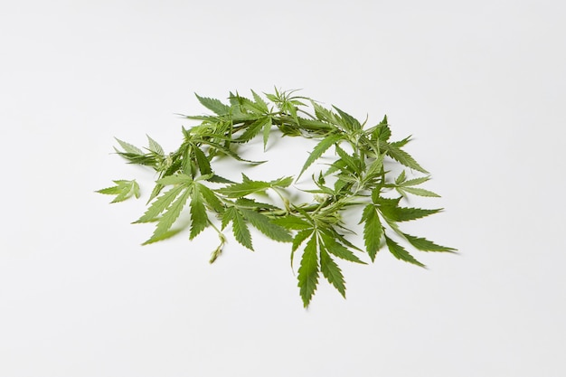 コピースペースのある明るい灰色の背景に、新鮮な天然マリファナの葉からの緑の花輪。医療目的のためのマリファナの概念使用。