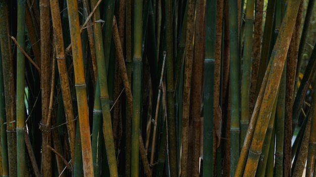 Green and yellow bamboo fence texture background, bamboo texture panorama