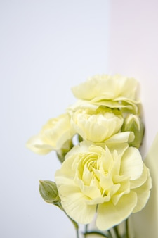 Зеленые желтые цветы гвоздики на белом фоне сирени. место для текста. день матери. открытка. день свадьбы. день святого валентина.