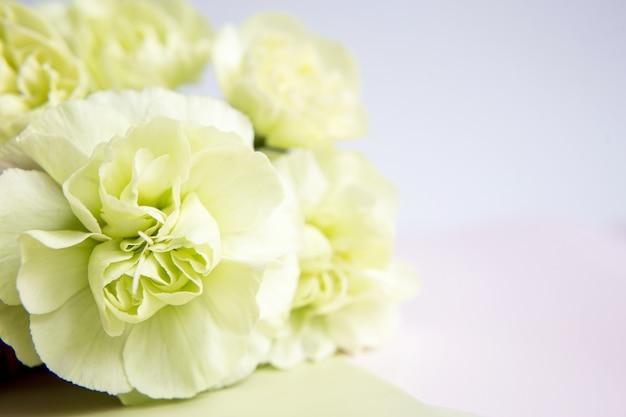 Зеленые желтые гвоздики на белом фоне сирени. место для текста. день матери. открытка. день свадьбы. день святого валентина