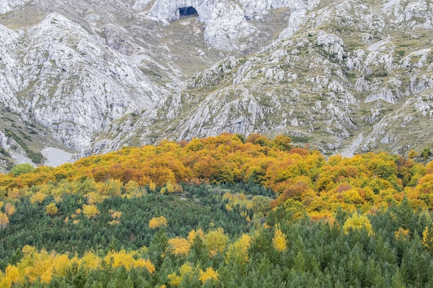Green and yellow forest in front of the mountains