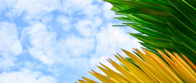 Green and yellow leaves in blue sky background.