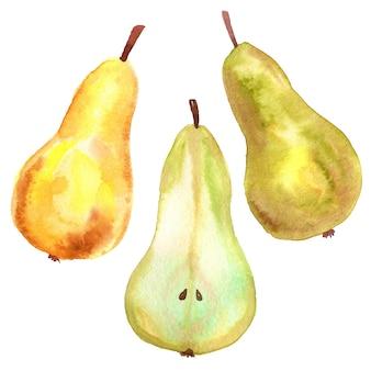 緑黄色梨、カット梨、黄赤梨。手描きの水彩イラスト。孤立。