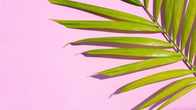 Зеленые желтые тропические пальмовые листья на розовой поверхности
