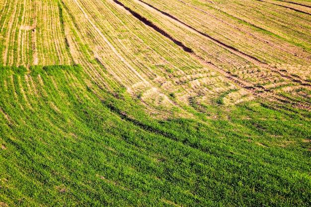 夏の緑の若い草
