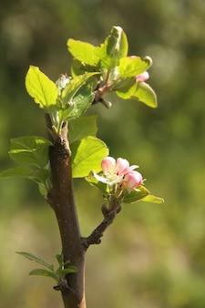 ぼやけた植生の背景に木質の木の幹で育つ緑の若い植物