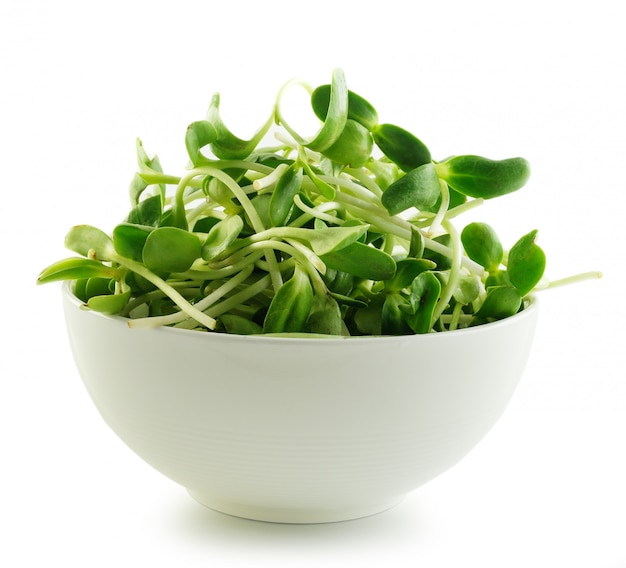 Green young sunflower sprouts in the bowl  isolated isolated