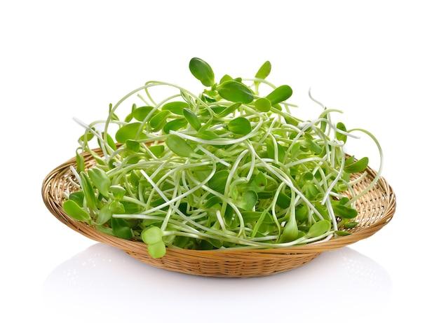 Зеленые молодые ростки подсолнечника изолированные