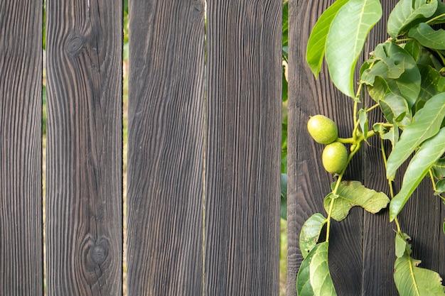 黒い木製の背景の木の上の緑の若いクルミ。クルミは収穫を見越して成長しています。クルミの木がクローズアップ。緑の葉の背景。スペースをコピーします。