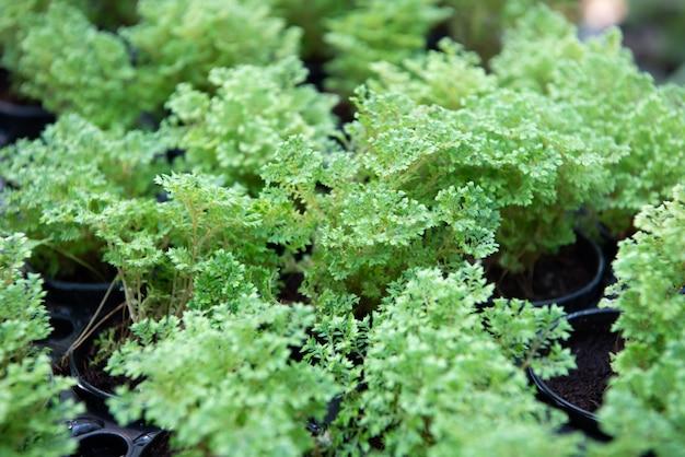 Зелень фона растений