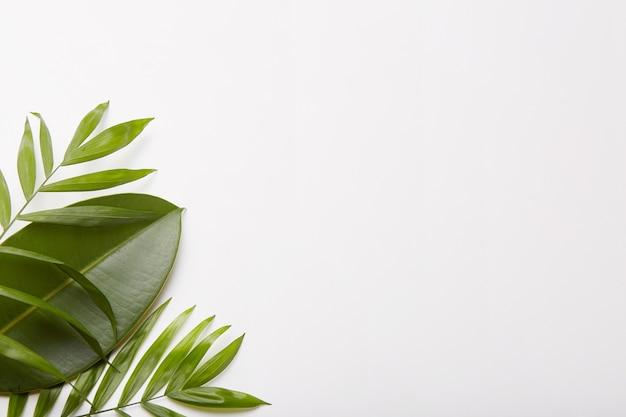 샷의 왼쪽 구석에 녹지. 식물 조성. 프리미엄 사진