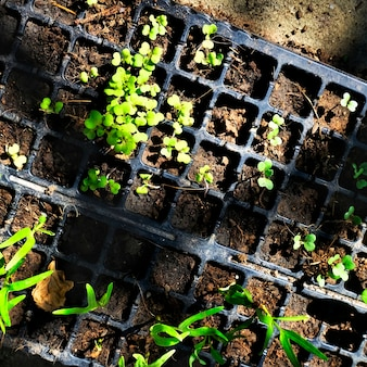 Greenery potted plants gardening nature
