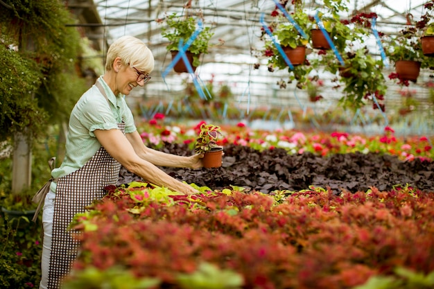 Greengardenの春の花を扱う格好良い年配の女性を見る
