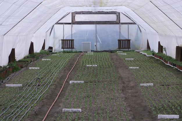 Greenhouse cultivation of plants flowers vegetables inside warm garden