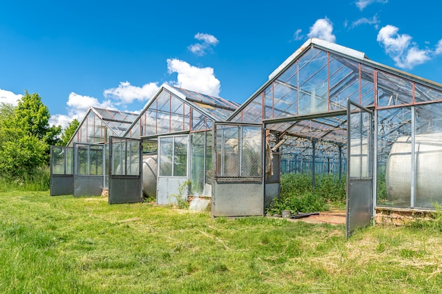 Greenhouse on the farm for growing healthy vegetables without chemistry