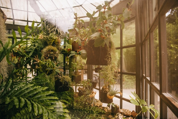 Greenhouse in forest