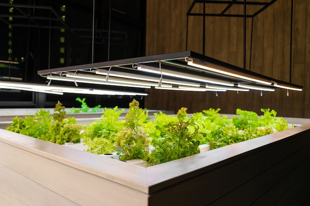 Greenhouse for growing lettuce and herbs close up