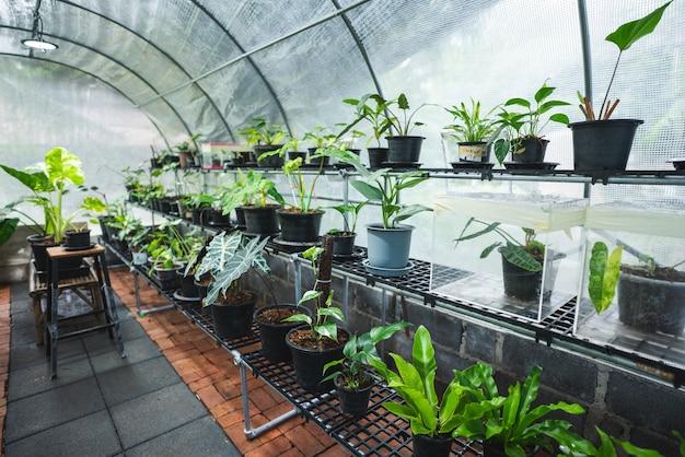 열대 잡색 식물의 온실, 녹색 잎 식물 자연 정원, 여름 봄 화초의 아름다운 식물학 꽃 배경, 장식용으로 새로 자라는 잎 꽃