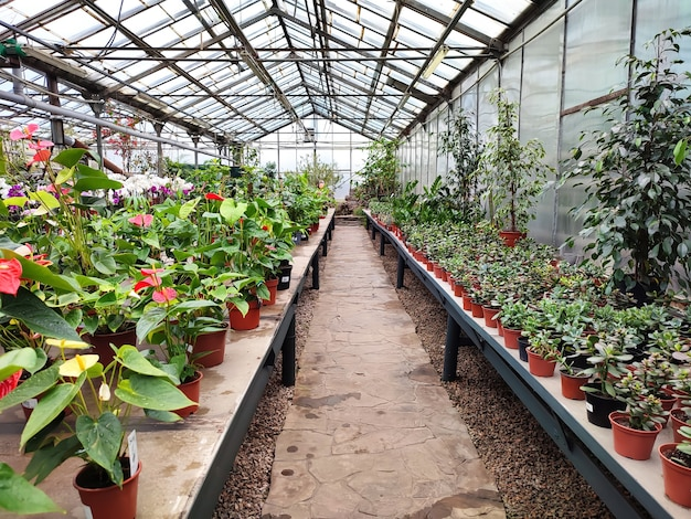 온실 또는 화려한 꽃과 식물로 가득한 유리 공장