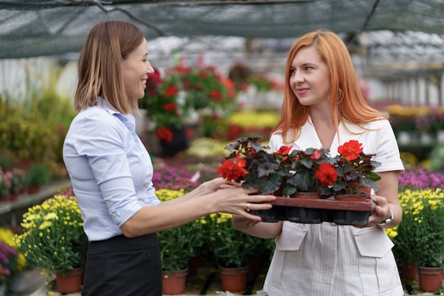 潜在的な顧客小売業者に花のオプションを提示する温室の所有者。