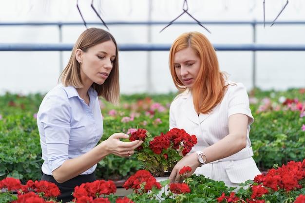 潜在的な顧客小売業者にゼラニウムの花を提示する温室の所有者。