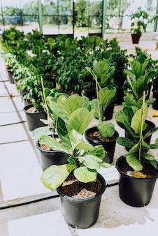 정원사에게 판매를 위해 재배된 온실 식물 종묘장.