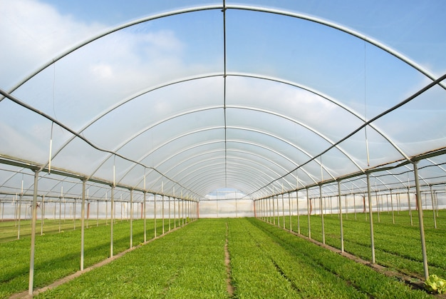Greenhouse for salad