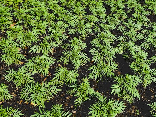 온실 묘목. 성장 하는 녹색 묘 목의 클로즈업입니다. 선택적 초점입니다. 매우 큰 식물 종묘장에서 자라는 어린 식물
