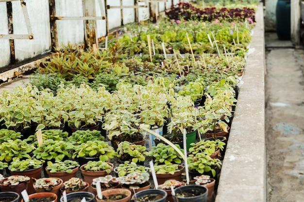 Greenhouse still life