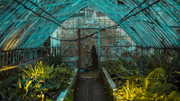 Greenhouse with botanical plants