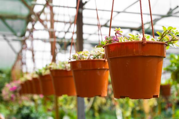 천장에 매달려 다른 식물을 가진 온실