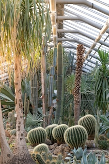 Greenhouse with various cacti
