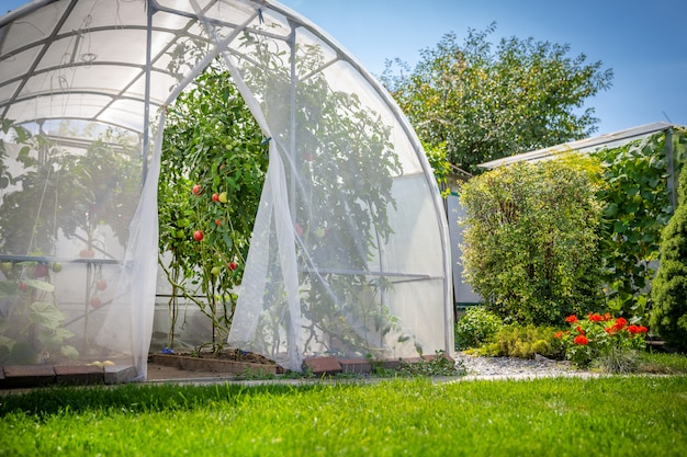 Greenhouse with vegetables in private garden in back yard