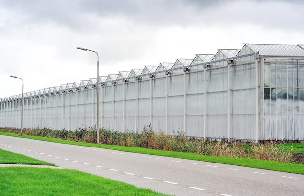 オランダの温室