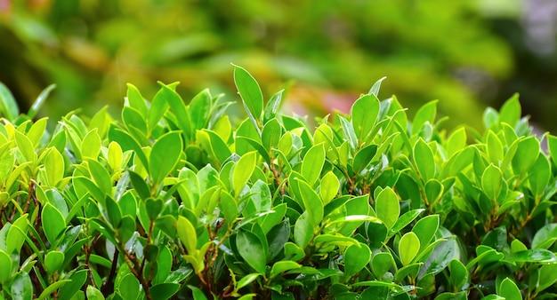 Зеленый лист красивый