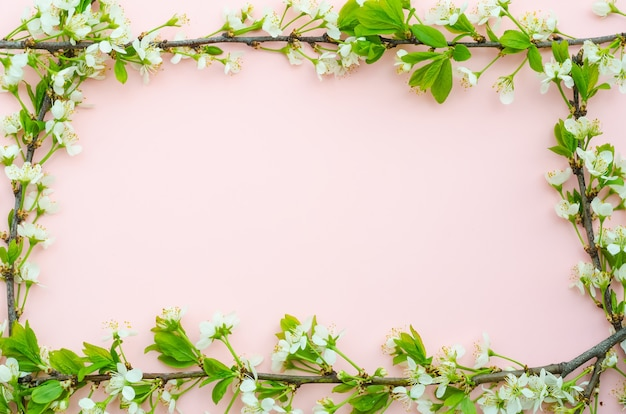 Greeting card background, delicate cherry flowers in the form of a frame on a pink background with copy space