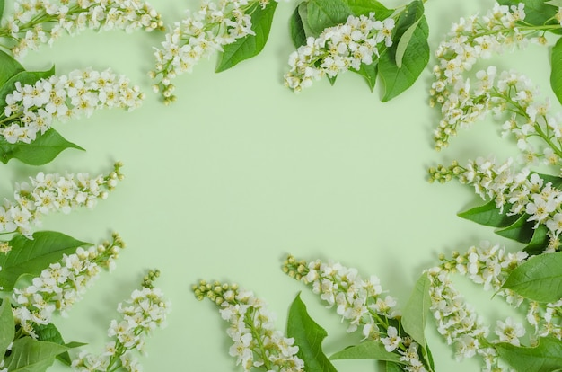 Greeting card background, delicate cherry flowers on a green background in the form of a frame with copy space