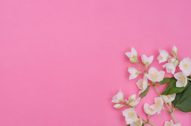 グリーティングカードの背景、選択的な焦点とコピースペースとピンクの背景に繊細なジャスミンの花