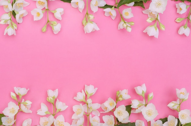 Greeting card background, delicate jasmine flowers on a pink background with copy space with selective focus