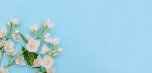 グリーティングカードのバナーの背景、選択的な焦点とコピースペースと青い背景の上の繊細なジャスミンの花