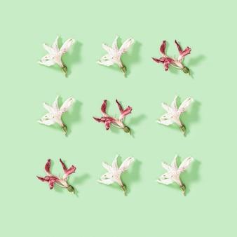 自然な乾燥した白と赤の花のアルストロメリアからのグリーティングカードの定期的な創造的なパターン。花柄。