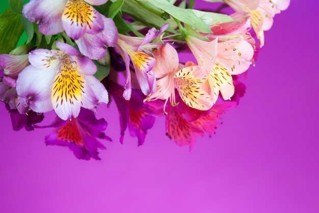 Greeting card with flowers. banner with alstroemeria flowers on a neon background.
