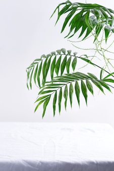 Greeting corner frame from green twigs of tropical exotic palm leaves above textile white
