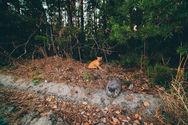 地面に横たわっている灰色とオレンジ色の猫