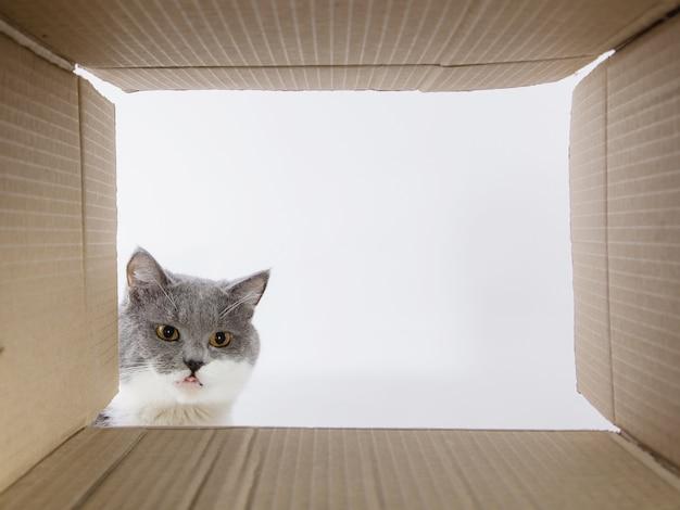 灰色の美しい猫、ダンボールのキャロブカをのぞいて、好奇心旺盛なペットが面白い場所をチェックします。コピースペース。