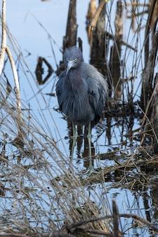 木の上の灰色の鳥