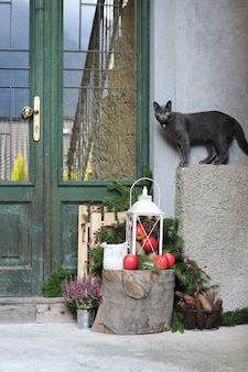 家の近くの灰色の猫とクリスマスの装飾