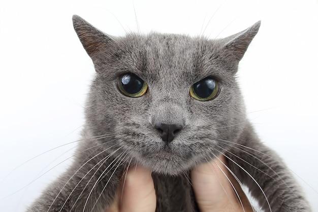 Серый кот держит лапу человека