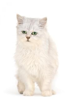 白の前に灰色の猫。
